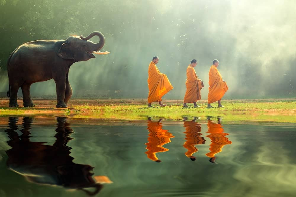 A young elephant with Monk alms round