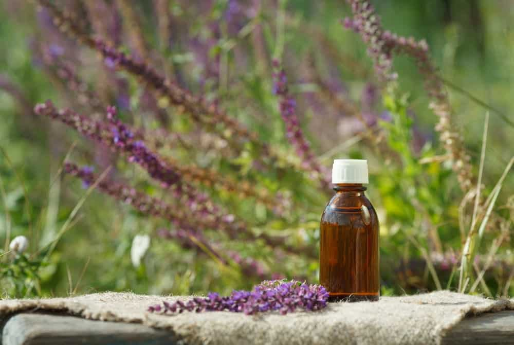 Clary Sage flowers and a bottle of essential oil.