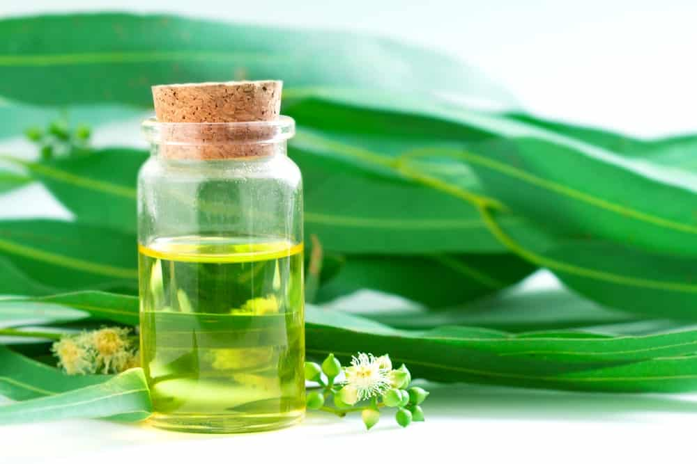 Eucalyptus leaves and a bottle of essential oil.