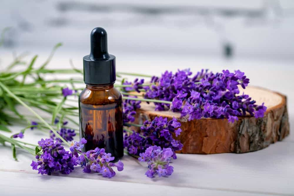 Lavender flowers and a bottle of essential oil.