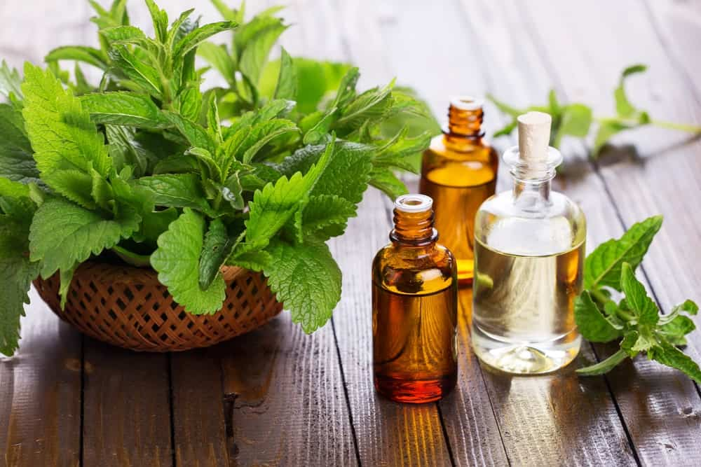 Peppermint leaves and bottles of essential oil.