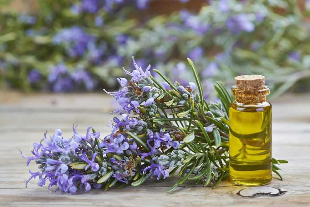 Rosemary flowers beside a bottle of essential oil.