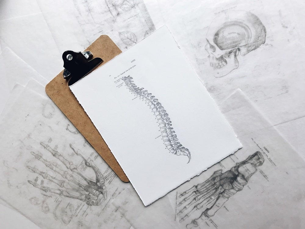 A diagram of a human spine on a clipboard, along with other medical drawings of body parts.